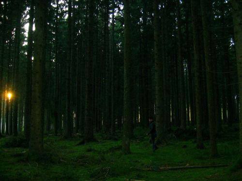 selva-negra-alemania